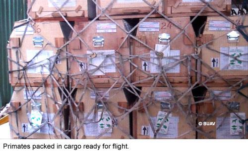 BUAV investigates Primates as Cargo